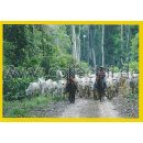 NG-039 - Sticker 039 - Panini National Geographic - Die...